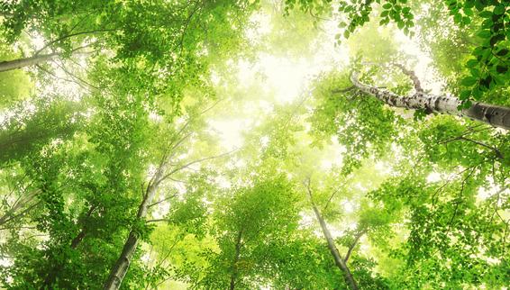 TTIA Environmental due diligence